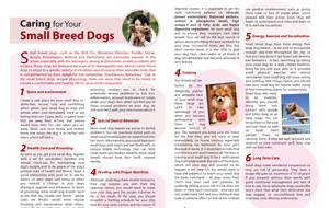 caring-for-your-small-breed-dogs