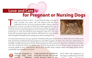 love-and-care-for-pregnant-or-nursing-dogs