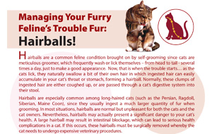 managing-your-furry-feline's-trouble-fur-hairballs