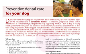 preventive-dental-care-for-your-dog