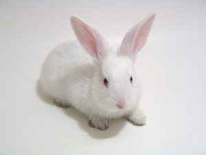 white-whabbit-1410791