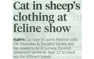 times-catshow