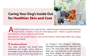 caring-your-dog's-inside-out-side-healthier-skin-and-coat