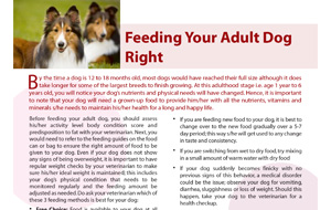 feeding-your-adult-dog-right