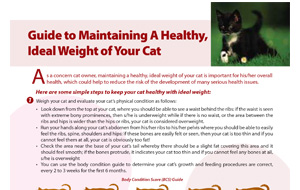 guide_to_maintaining_healthy_idealweightofyourcat